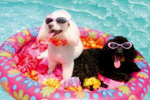 Vacanță cu câinele